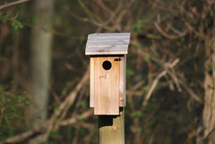 Hopeful Bluebird House