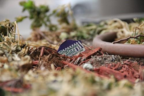 Stutzmans Select dead plants