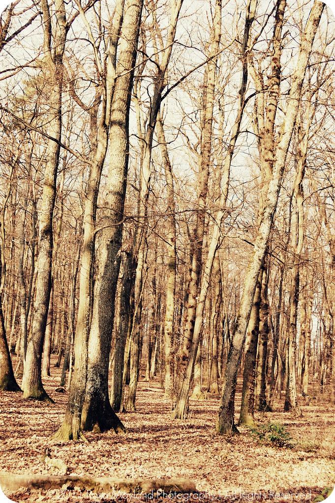 Woods Veyrier 1.3 bis