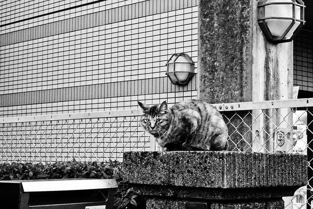 Today's Cat@2011-02-23