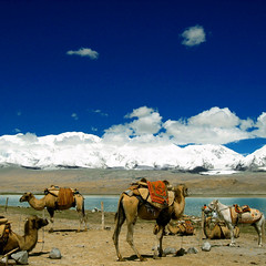 the silk road caravan (Xuan Che) Tags: 2005 china travel blue summer sky white mountain lake snow color tourism water animal clouds landscape highway border peak august glacier camel xinjiang silkroad karakoram nomad caravan kyrgyz himalaya centralasia canonixus400 pamir karakol tashkurgan hindukush highplateau kongar gettycandidate