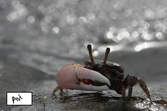 Bokeh Crab (AvijitNandy) Tags: