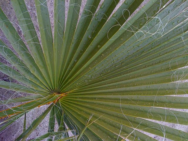 Rainy palm