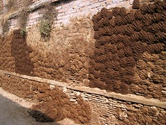 Varanasi Old City - Cow Dung Wall (zorro1945) Tags: varanasi asia india cowdung handprints wall varanasioldcity benares art culture religion hinduism h