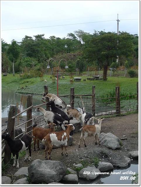 宜農牧羊場 (15)