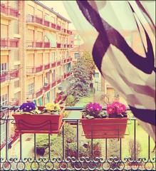 [..].un.inverno.che..gi.via.da.noi[..] (fi0na) Tags: pink flowers winter light italy verde green window colors leaves yellow foglie alberi fleurs photoshop vintage italia colours action couleurs curtain perspective violet fake rosa finestra taglio nostalgia piemonte giallo crop lumiere frame fiori primule inverno colori fucsia luce italie tenda cornice balcone viole palazzi prospettiva pini asti lyric monferrato retr ringhiera condomini canzone ritocco musicaitaliana malikaayane comefoglie