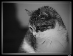 where are you? (VeMa the F.C.A.) Tags: cats cat gatto gatti milly fca gatta wlf vema canon7020028is