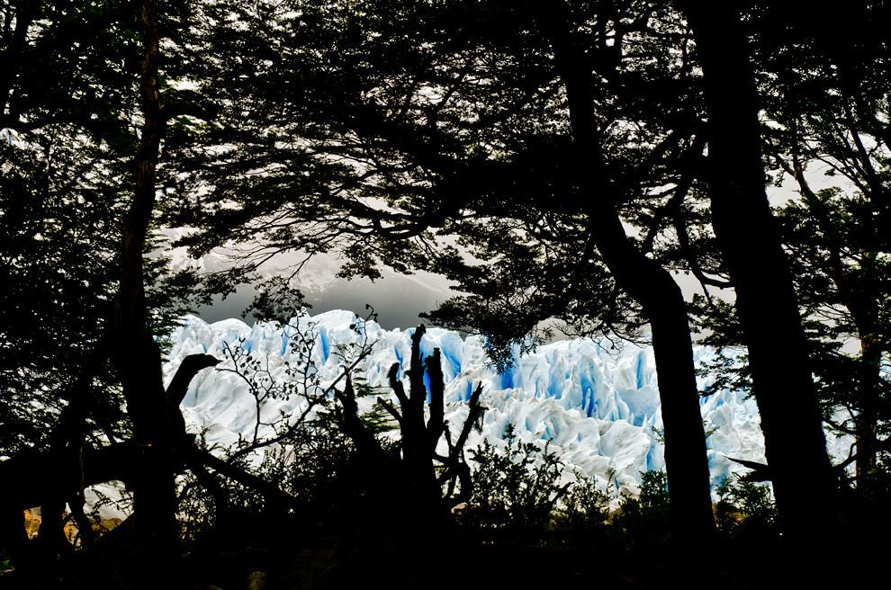 Los bosques de Nothofagus, en sus variedades de Lengas, Ñires y Guindo forman parte de la flora que rodea al glaciar. (Roberto Dam - Patagonia, Argentina)