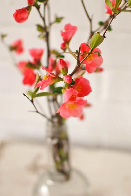 fresh blooms. {71/365}