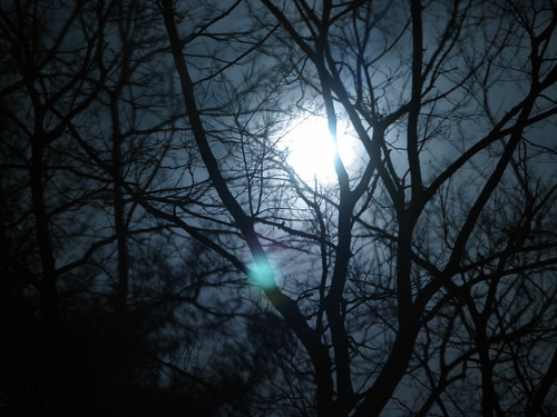 Supermoon through tree branches