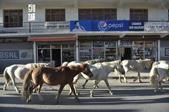 _NKN2306 (j1020) Tags: nikond750 leh ladakh culture