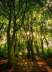 Shadows and Light 4 (JodBart) Tags: woodlandtrust billinge wigan trees green shadows light fuji manuallens