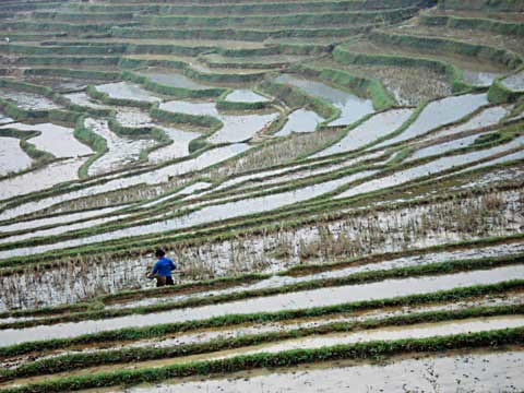 A solitary farmer works silently in the rice terraces inside the Pu Luong reserve