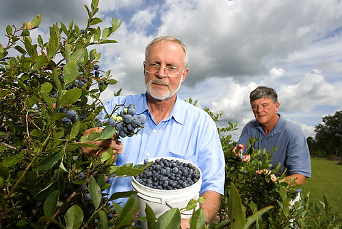 The webinar talked about how the Specialty Crop Block Grant Program helps blueberries and other specialty crops remain competitive in the market.