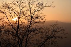 il sole tra i rami spogli (rino_savastano) Tags: alberi italia tramonto explore campagna pro sole molise foschia albeetramonti macchiavalfortore rinosavastano