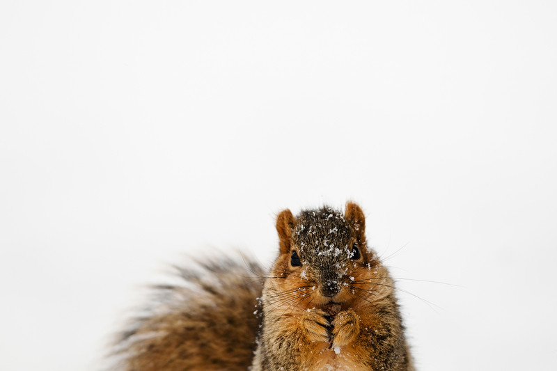110124_Squirrel_01