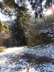 Un rayon de soleil sur la neige