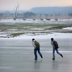 A chance to discover Dutch wilderness (Bn) Tags: winter cold holland ice nature netherlands dutch sport speed season frozen geese topf50 tour child iceskating skating smooth thenetherlands reserve freeze enjoy skate chilly skater wilderness wintertime viking frigid glas thick pleasure emptiness breathtaking reddeer flevoland lelystad iceskate belowzero waterland almere ijs schaatsen noren genieten schaats oostvaardersplassen ijspret elfstedentocht yourney leegte naturalice 50faves natuurijs elevencitiestour seaofice edelherten oostvaardersdijk ijzers schaatstocht bevrorenmeer skatingonnaturalice dutchskaters schaatseninwaterland skateoutdoor schaatsgekte ijstochten lakefreezeover dichtbevroren ijsoppervlakte schaatsrijders 29december2010 20cmthickice elfstedendtocht