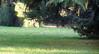 (7465) la quiete (franchino70) Tags: parco belvedere lecco