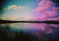 (xochii) Tags: film northerncalifornia 35mm napavalley wideandslim
