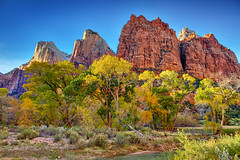 "Autumn at Court of the Patriarchs - Zion NP (IronRodArt - Royce Bair (""Star Shooter"")) Tags: park travel blue autumn trees light vacation sky usa mountain southwest color fall nature beautiful leaves yellow rock backlight america forest court river season landscape utah back woods sandstone colorful desert natural grove outdoor scenic large peaceful sunny canyon foliage formation virgin national cottonwood trunk zion wilderness canopy graceful patriarchs"