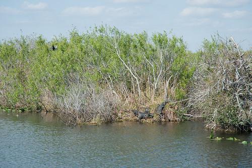 Everglades-20