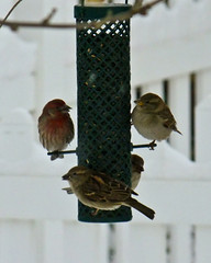 Bird Feeder Full house