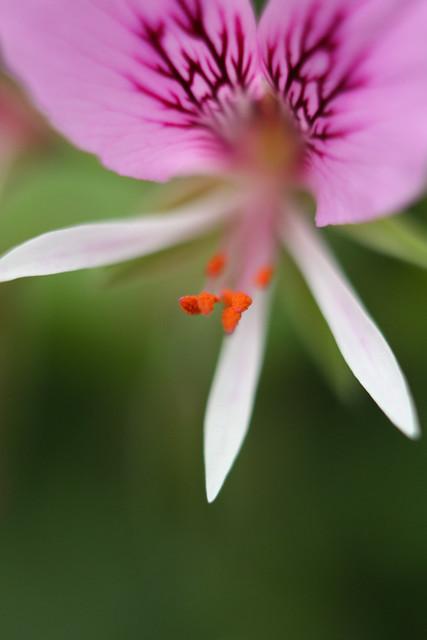 Longwood Gardens-8.jpg