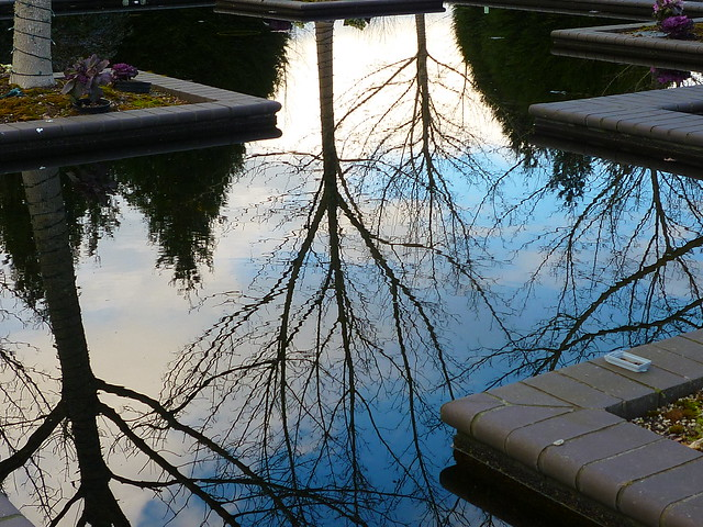 reflecting pond