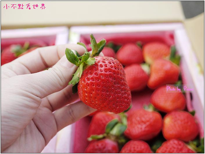 甜柿先生-草莓 (10).JPG