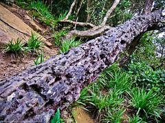 Дерево после термитов