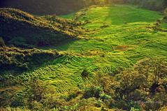 Hutaginjang -DSC_0107 (Johnny Siahaan) Tags: sunset mountains misty clouds sunrise indonesia gunung batak toba laketoba sumatera huta danautoba sumaterautara tobalake matahariterbit tapanuliutara hutaginjang taput johnnysiahaan mataharipagi fotodanautoba fotohutaginjang