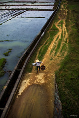 Way to home (-clicking-) Tags: life road people water way landscape evening countryside asia long path country vietnam countryroad waytohome gotohome