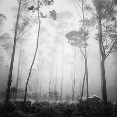 Hut (Hengki Koentjoro) Tags: trees white mist beauty rain fog forest surreal hut layers 500x500 theworldwelivein naturepoetry winner500