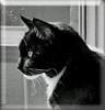 Cortez en profile (Cajaflez) Tags: portrait pet cat blackwhite kat chat zwartwit profile tuxedo katze cortez portret gatto huisdier kater cc100 kissablekat bestofcats catmoments 100commentgroup saariysqualitypictures mygearandme mygearandmepremium