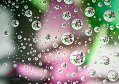 paper swans (Linh_rOm) Tags: nikon waterdrop purple sydney australia refraction waterdrops 2011 paperswan d5000 hacgiay linhrom