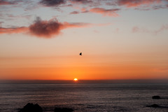 Irlanda: puesta de sol (M.A.Fernndez) Tags: ireland sunset bird birds zeiss landscape sony sombra paisaje panoramic panoramica carl alfa puestadesol pajaro alpha 700 irlanda pjaro panormica carlzeiss acantilados 1680 a700 sonyalpha sonyalfa zeiss1680 carlzeiss1680 alpha700 sonyalpha700 alfa700