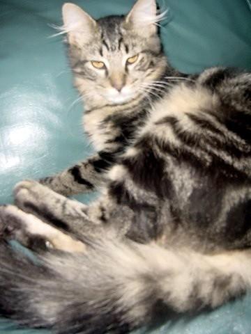 Darwin Yvonne's Lost Cat
