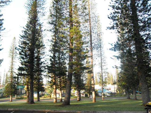 Morning in Lanai City
