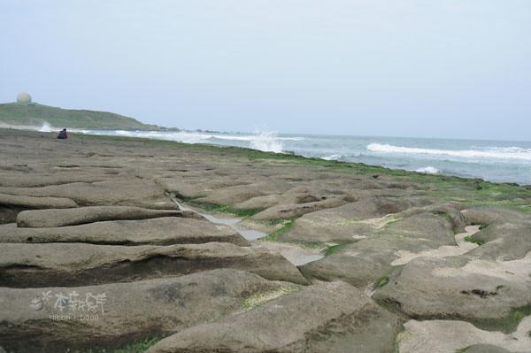 綠色海藻,尚未完全佈滿