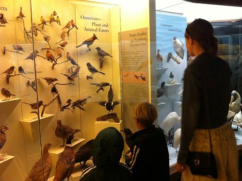 santa barbara natural history museum