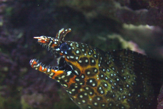 moray eel, waikiki aquarium