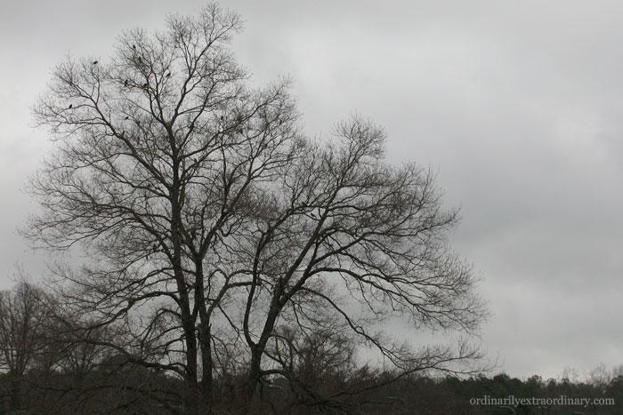 Feb252011_0001Bweb