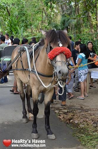 ecopark horse