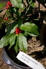 stritz-1581.jpg (jstritz) Tags: plant fhsp
