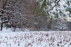 stritz-4096.jpg (jstritz) Tags: park winter fhsp