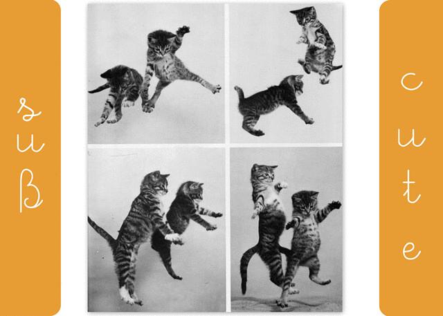 cat-collage-WEB