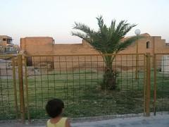 أبو يوسف (( وسيم المطر )) (الفتى المحمدي) Tags: sy الفرات درة raqa الرقة أبويوسفوسيمالمطر
