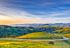 Ode to John Tolan >EXPLORE (Silent G Photography) Tags: california ca sunset fog coast cattle explore morrobay morrorock hdr sanluisobispo photomatix seecanyon highdynamicrangephotography lightroom3 d7000 nikkor1635 markgvazdinskas silentgphotography johntolan