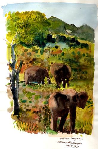 Ngulia Hills, Kenya